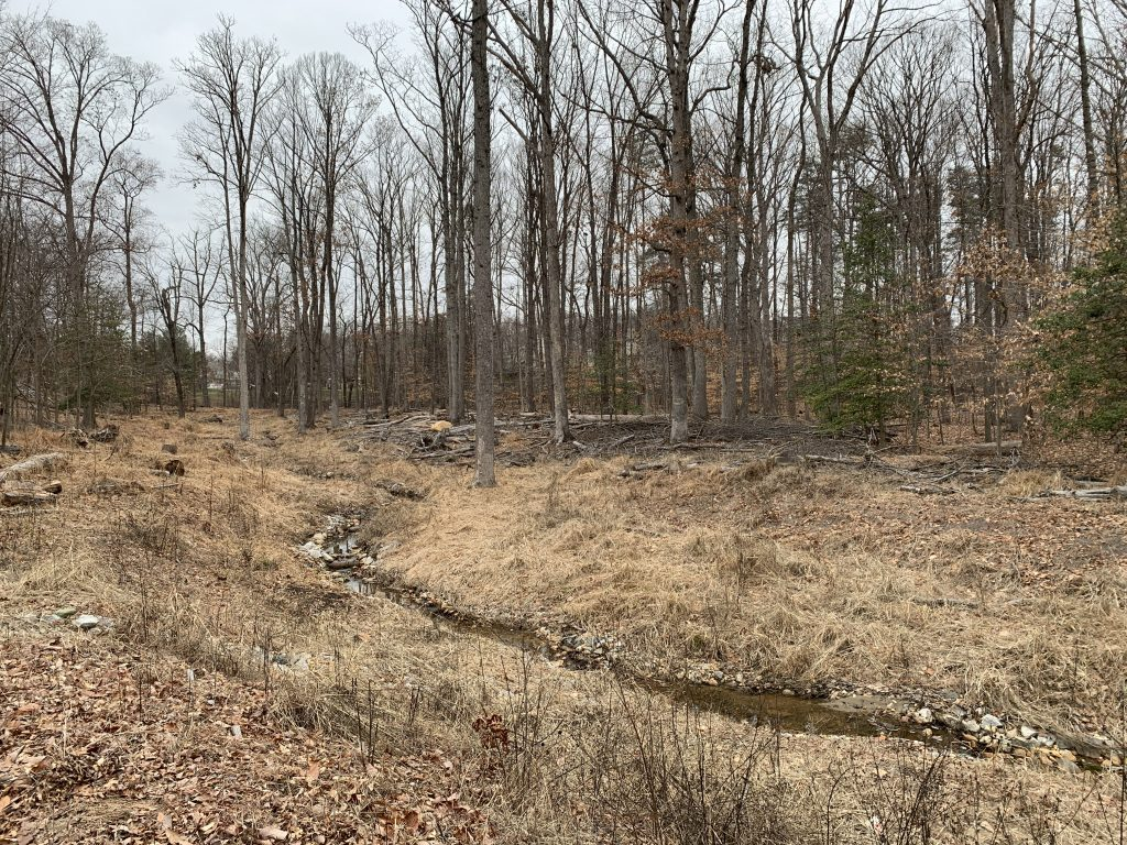 A creek is surrounded by dead leaves and grass and dormant trees. The area is ready to take root in spring.